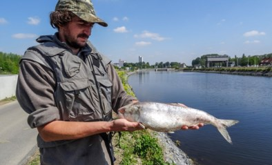"""100 jaar uitgestorven vis dood teruggevonden: """"Dramatisch dat eerste vondst omkwam door vervuiling"""""""