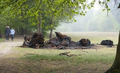 Vandalen steken 'Dikke Bertha' in brand: 350 jaar oude boom herleid tot hoopje as