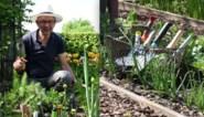 Onze expert test 10 tuinschepjes: zijn de grote prijsverschillen een maatstaf voor kwaliteit?