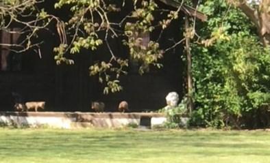 Superschattig: kleine vosjes leven zich uit in de tuin van Sabrina en Mimmo