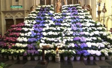 Tongenaren doneren massaal bloemen om basiliek te versieren