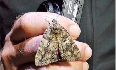 Meer dan duizend soorten nachtvlinders gespot in Grenspark Kalmthoutse Heide