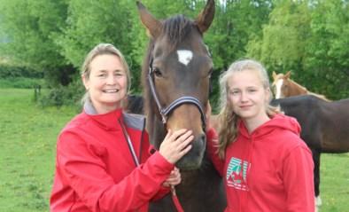 Paardenliefhebbers eindelijk herenigd met hun geliefde dieren: