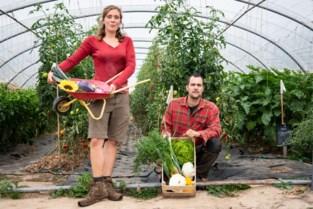 """Landbouwingenieurs springen op biotrein met succesvolle groenteboerderij: """"Veel leuker dan een bureaujob"""""""