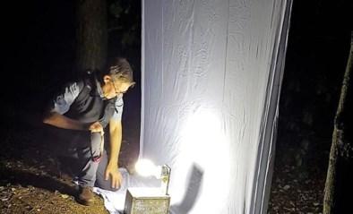 Meer dan duizend soorten nachtvlinders gespot