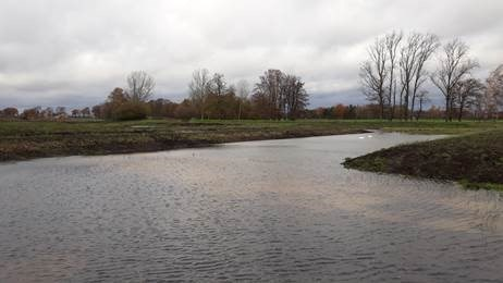 Zuiverder water in vijvers de Luysen moet speciale vogels en amfibieën lokken