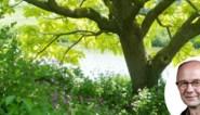 Heb je schaduw nodig in de tuin? Ga dan voor een boom in plaats van een parasol