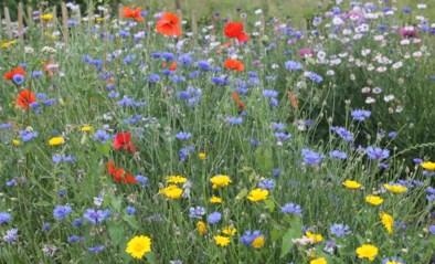 'Bloemenzaak' de berm is wel open op Moederdag: tips voor een leuk én gratis boeket