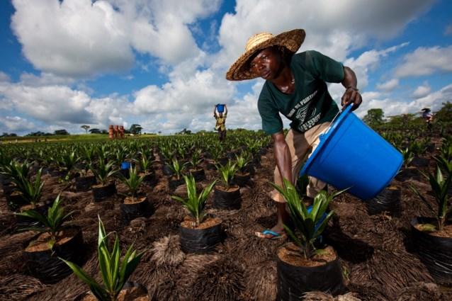 Ontbossing versnelt in Afrika: 3,9 miljoen hectare per jaar