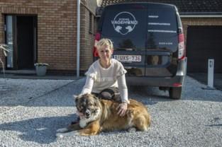 Lindsay maakt van haar passie haar beroep: honden uitlaten