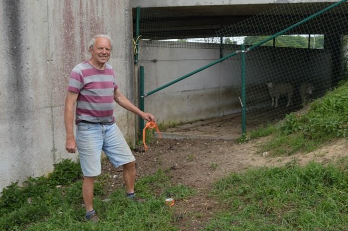 """Schapendieven sleuren moeder en lammetjes over hek: """"Alleen een rol tape met plukken wol bleef achter"""""""