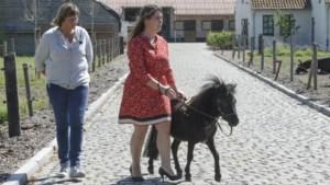"""Gevochten voor zijn leven na vergiftiging, maar nu afgekeurd als blindengeleidepaard: """"Dinky kan niet meer doen waar hij voor werd opgeleid"""""""