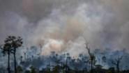 Ontbossing in Braziliaans Amazonewoud opnieuw fors gestegen in april