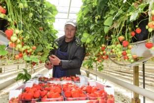 """Deze mensen plukken uw fruit en komen daarvoor uit land met minder besmettingen: """"We rekenen erop dat het hier veilig is"""""""