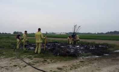 Buitenbrand in Zwaluwstraat