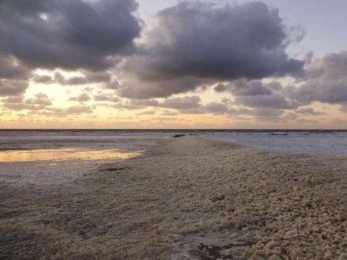 Geen groene plantjes in Blankenberge: strand ligt bedolven onder vieze blubber