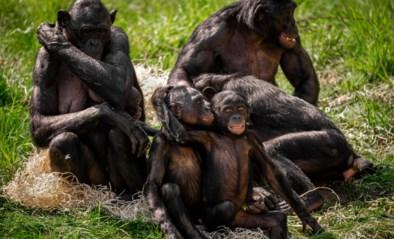 Planckendael en Zoo tot 1 juni enkel voor abonnees