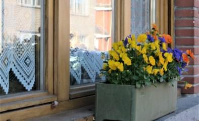 Dieven stelen bloemen van vensterbanken
