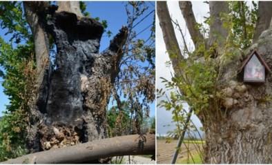 Onbekenden steken kapelletje aan boom in brand