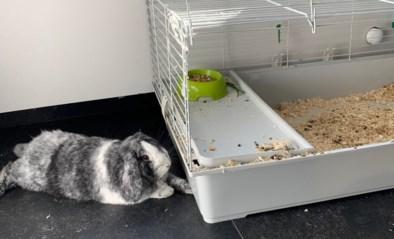 """Politie vindt konijn in kooi langs de weg: """"Denk twee keer na voor je een dier in huis haalt"""""""