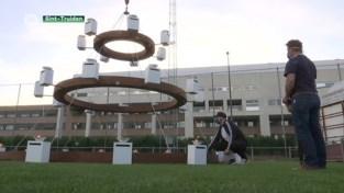 Truiense kunstenaar Tom Herck ontsteekt 33 kaarsen op kroonluchter Sint-Trudo Ziekenhuis