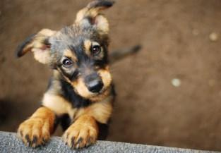 """West-Vlaams asiel stopt met adoptie van honden: """"Mensen vragen of ze de dieren na de lockdown mogen terugbrengen"""""""