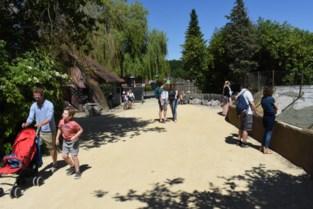 Pakawi Park ontvangt 400 bezoekers op eerste dag na coronasluiting