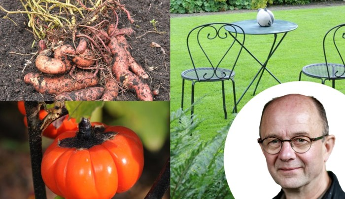 Voor heel wat groenten is dit het ideale moment om te planten: onze expert geeft enkele suggesties