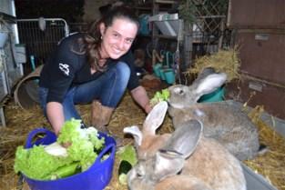 """Steeds meer mensen willen een konijn adopteren, maar dat is niet altijd goed nieuws: """"Ik vrees dat na de coronacrisis veel konijnen gedumpt gaan worden"""""""