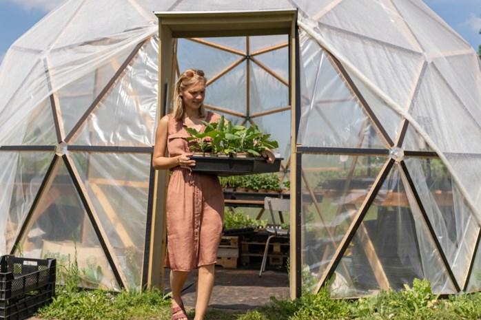 "Waar ooit middenstip legendarisch stadion lag, laat Heleen (28) plantjes groeien: ""Koop lokaal? Kweek lokaal kan evengoed"""