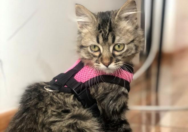 Nieuwe hoop voor Lee: moet katje terug naar Peru om aan euthanasie te ontsnappen?