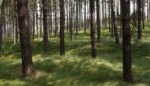 Bos van Terhagen nu definitief bosgebied
