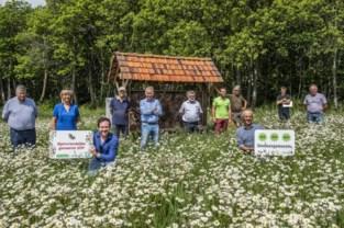 Staden wil zich profileren als bijendorp met bloemenweides en bijenhotel