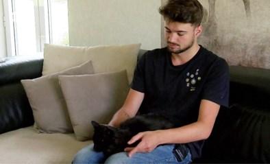 """Vermiste Antwerpse kat na twee jaar terug thuis: """"Hebben dit uitbundig gevierd"""""""