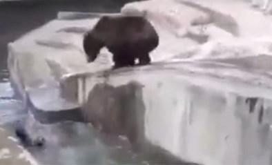 Dronken man probeert beer te verdrinken in Poolse zoo (maar heeft geluk dat hij het zélf overleeft)