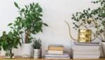 Liefhebster levert eerste hulp bij het verzorgen van je kamerplanten