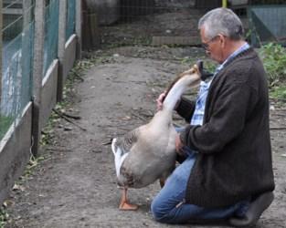 """Al meer dan 40 kippen, eenden en ganzen gestolen: """"Zijn kippen en hun eieren dan zo waardevol?"""""""