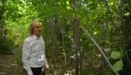 """Onbekenden vernielen 175 jonge eikenboompjes tijdens raid in park: """"Onbegrijpelijk dat iemand zoiets doet"""""""
