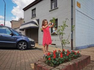 Buurtbewoners Borgt hebben eigen coronawensboom