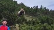 Bruine beer verrast 12-jarige jongen in de bergen, maar die laat zich niet opjagen