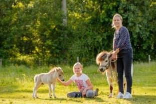 """Sandy van Stal van de Molenweg vraagt dieren niet te voederen: """"Onze pony's kunnen erg ziek worden van keukenafval"""""""