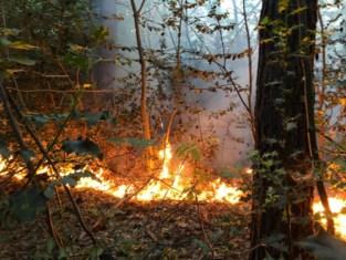 Brandweer rukt in alle vroegte uit voor bosbrand