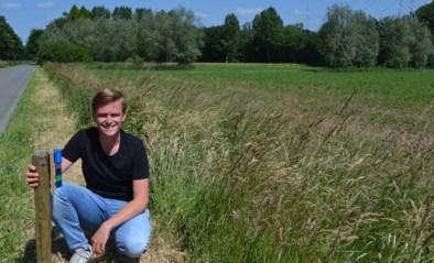 Gemeente zet wildspiegels om aanrijdingen met reeën te vermijden