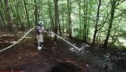 """Door turf in bodem van Zoniënwoud blijft een 'gedoofde' brand een risico: """"Hou met deze droogte geen barbecue in de natuur"""""""
