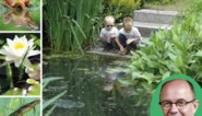 Persoonlijke plekjes en minder vissen: tips om van je vijver een blijver te maken
