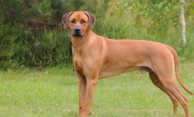 """Jager vrijgesproken voor doodschieten hond: """"Hij was aan het autorijden op moment van fatale schot"""""""