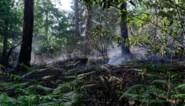 Natuur staat kurkdroog: nu ook brandje in Ossegempark