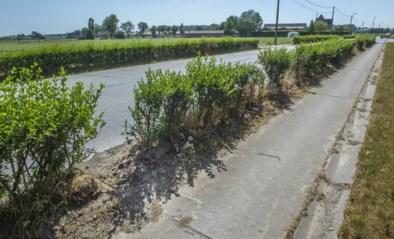 """Jonge boompjes vernield, burgemeester woest: """"Voor elke vernielde boom komen er twee in de plaats"""""""