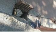"""Brandweerman redt twee eendenkuikentjes uit rioolput: """"Het is eens iets anders"""""""