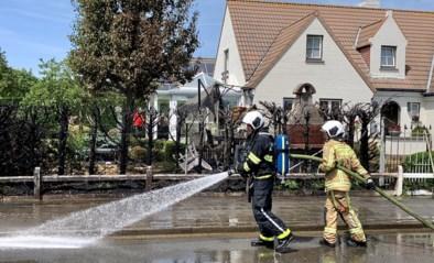 Barbecue veroorzaakt zware haagbrand maar huis blijft gespaard